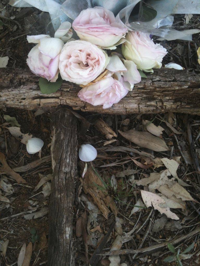 resized-roses-rsz_img_1191